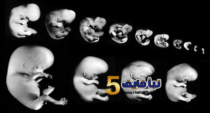 2017 02 23 183206 - مراحل نمو الجنين اسبوعياً