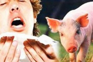 اشتباة بوجود مرض انفلونزا الخنازير في مستشفى معان الحكومي