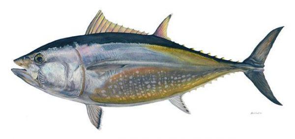 هل تعلم فوائد سمك التونة الذهلة ؟