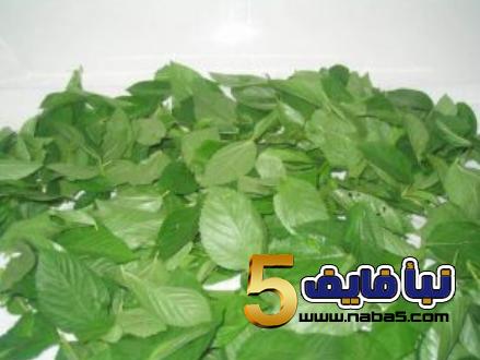 bb 2 - تعرف على كيفية زراعة نبات الملوخية بالخطوات