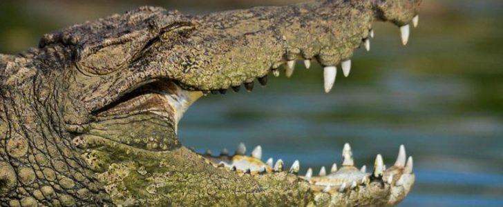 تفسير حلم التمساح للامام الصادق