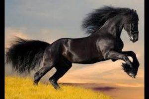 تفسير حلم الحصان الابيض الهائج