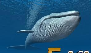 تفسير حلم الحوت لابن سيرين