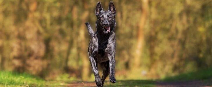تفسير حلم نباح الكلاب في المنام
