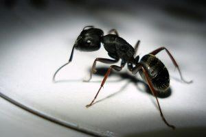 تفسير رؤية النمل الاسود الصغير في المنام