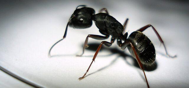 تفسير رؤية النمل الاسود الصغير في المنام نبأ فايف