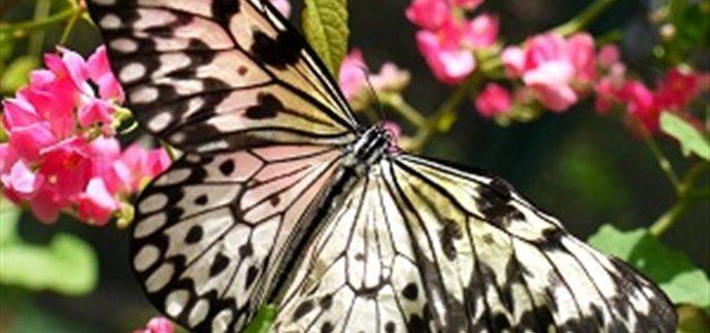 تفسير الفراشه في البيت في المنام
