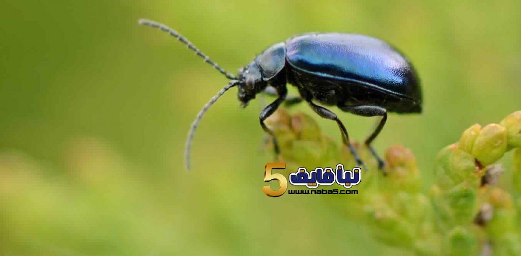 تفسير حلم الحشرات السوداء للمتزوجة والرجل