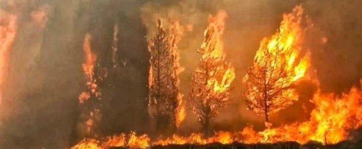 حرائق كبيرة تجتاح لبنان .. واستنفار كبيرة لأخمادها